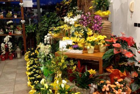 Vendita al dettaglio piante udine azienda agricola for Vendita piante orto