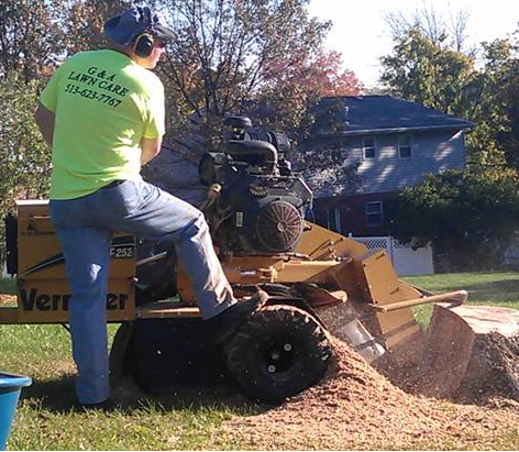 We remove stumps