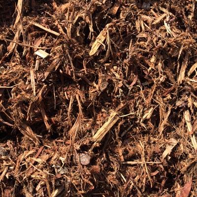 hoop pine bark