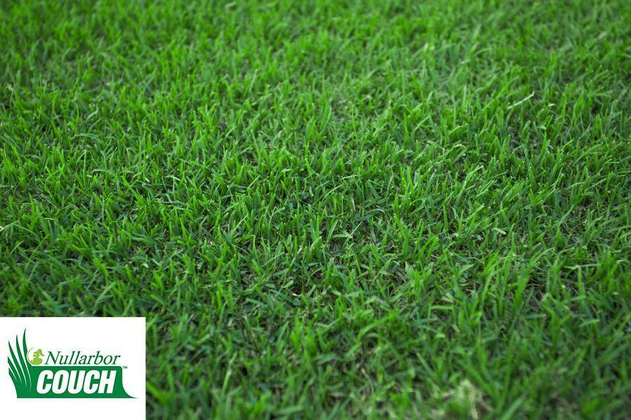 apollo landscaping sir walter premium lawn turf