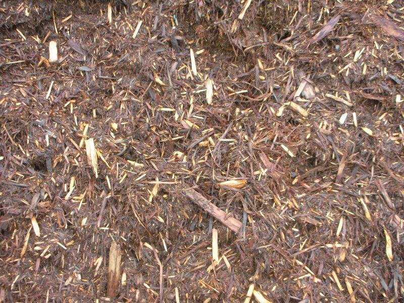 red cypress mulch