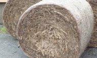 sugar cane mulch large