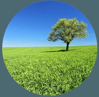 Vendita alberi da frutto bologna arborea soc coop for Vendita alberi da frutto adulti