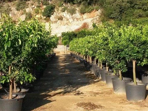 Piante da frutto liguria