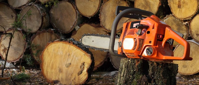An orange chainsaw on a tree trunk in front of a pile of logs