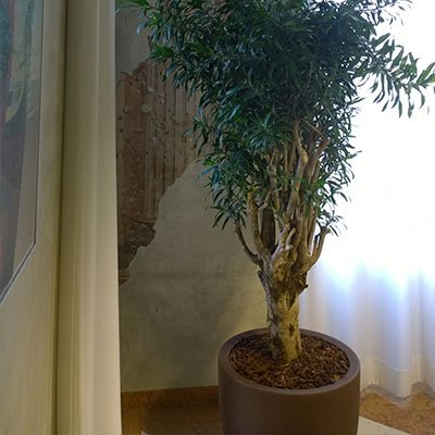 un vaso con un albero da interno
