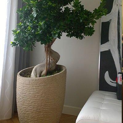 un vaso di color beige con un albero bonsai