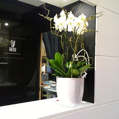un vaso grande in ceramica con delle orchidea