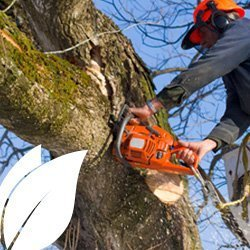 Tree surgery experts