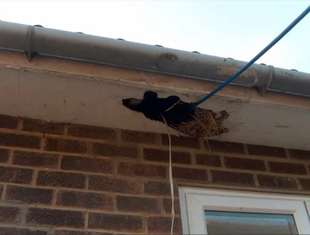 Asbestos Sheeting Removal By George S Waste