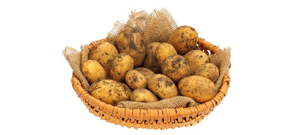 Potato experts