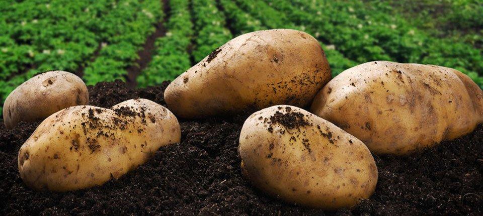 Family-run potato suppliers