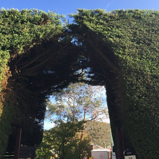 hedge archway
