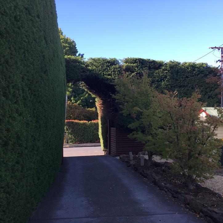 hedge walkway