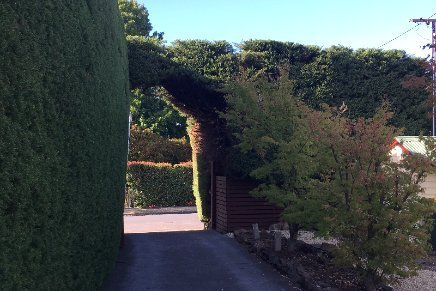 pruning and hedge trimming