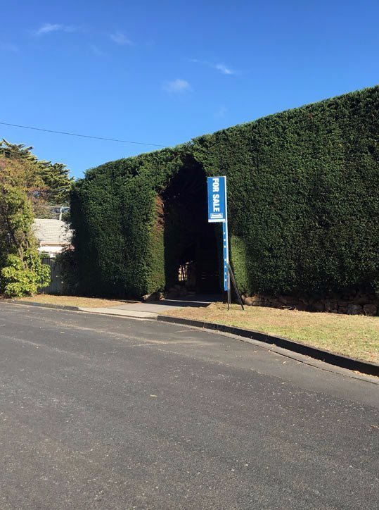 hedge on street