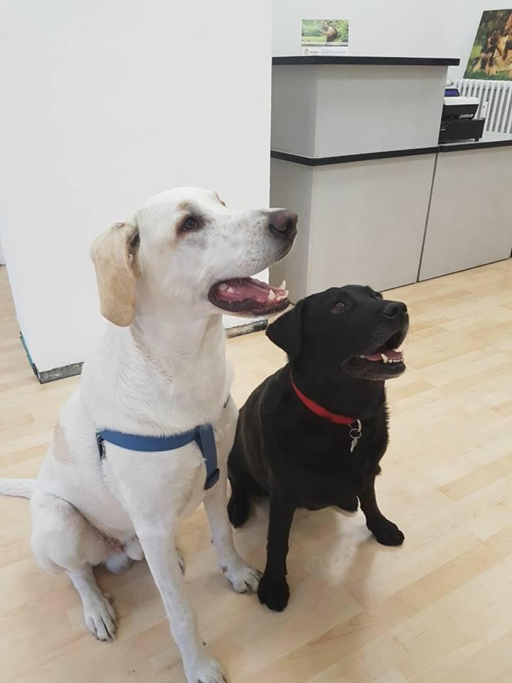 un cane bianco e uno nero che guardano in alto