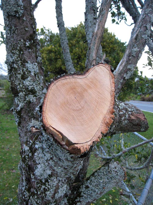 cut tree branch