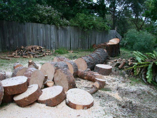 felled tree cut into sections