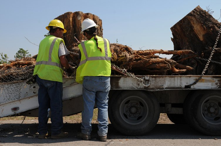 two workers chaining large tree trunk to truck bed
