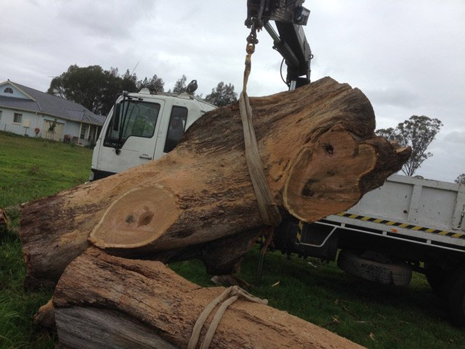 A large tree removal process