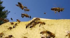 Vendita prodotti apicoltori