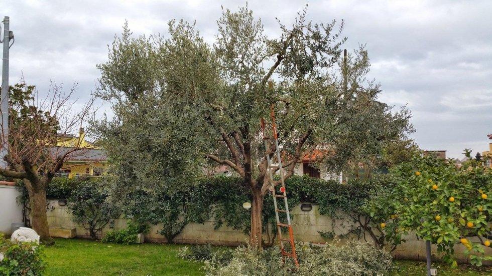 potatura alberi