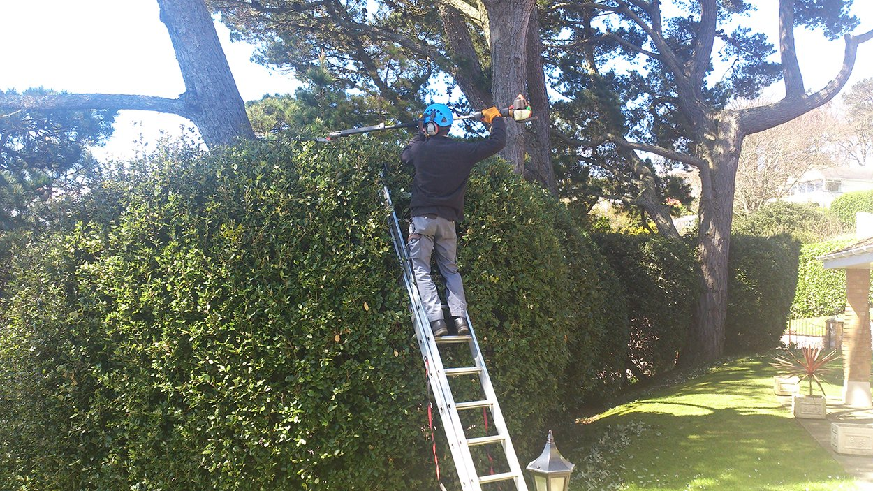 Hedge landscaping