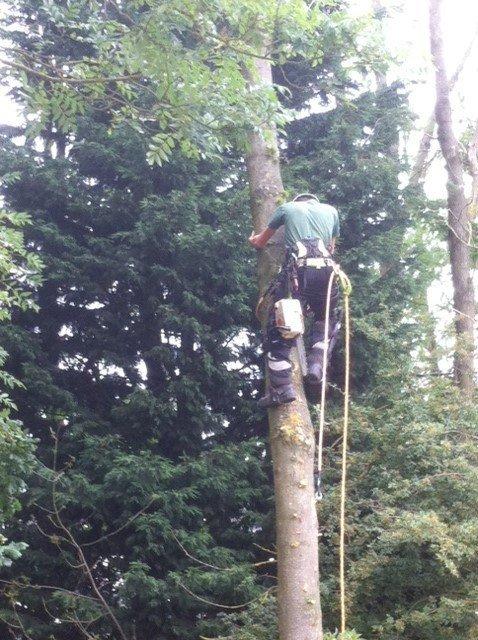 tree felling expert
