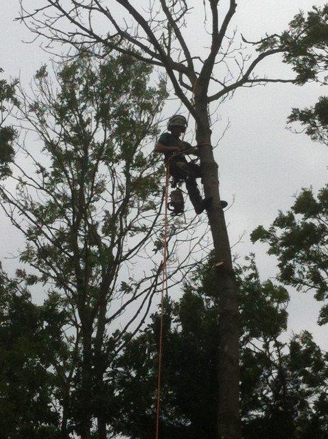 single tree felling