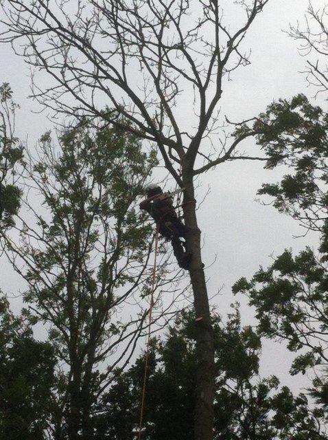 tall tree branch cutting