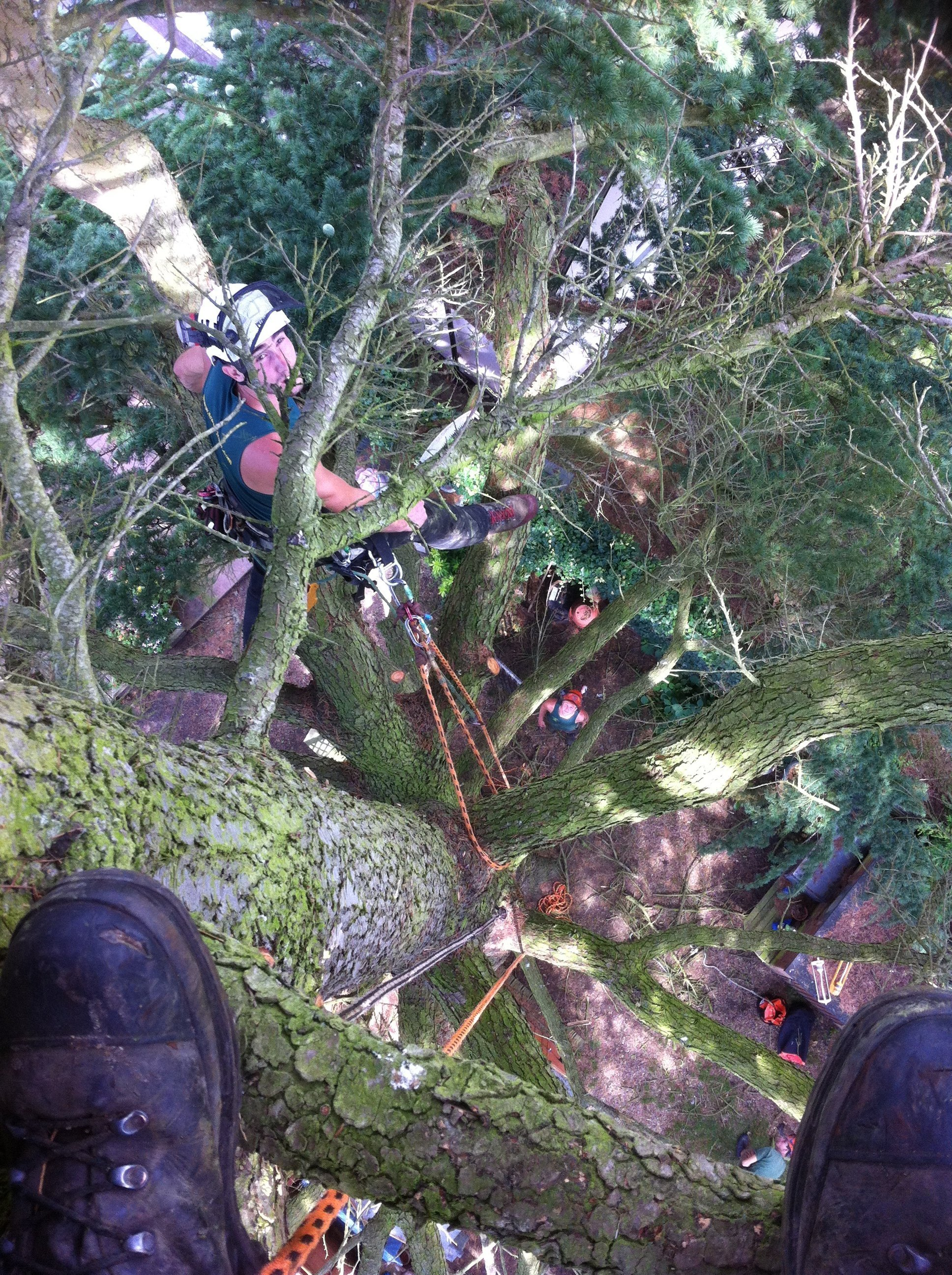fallen tree cutting