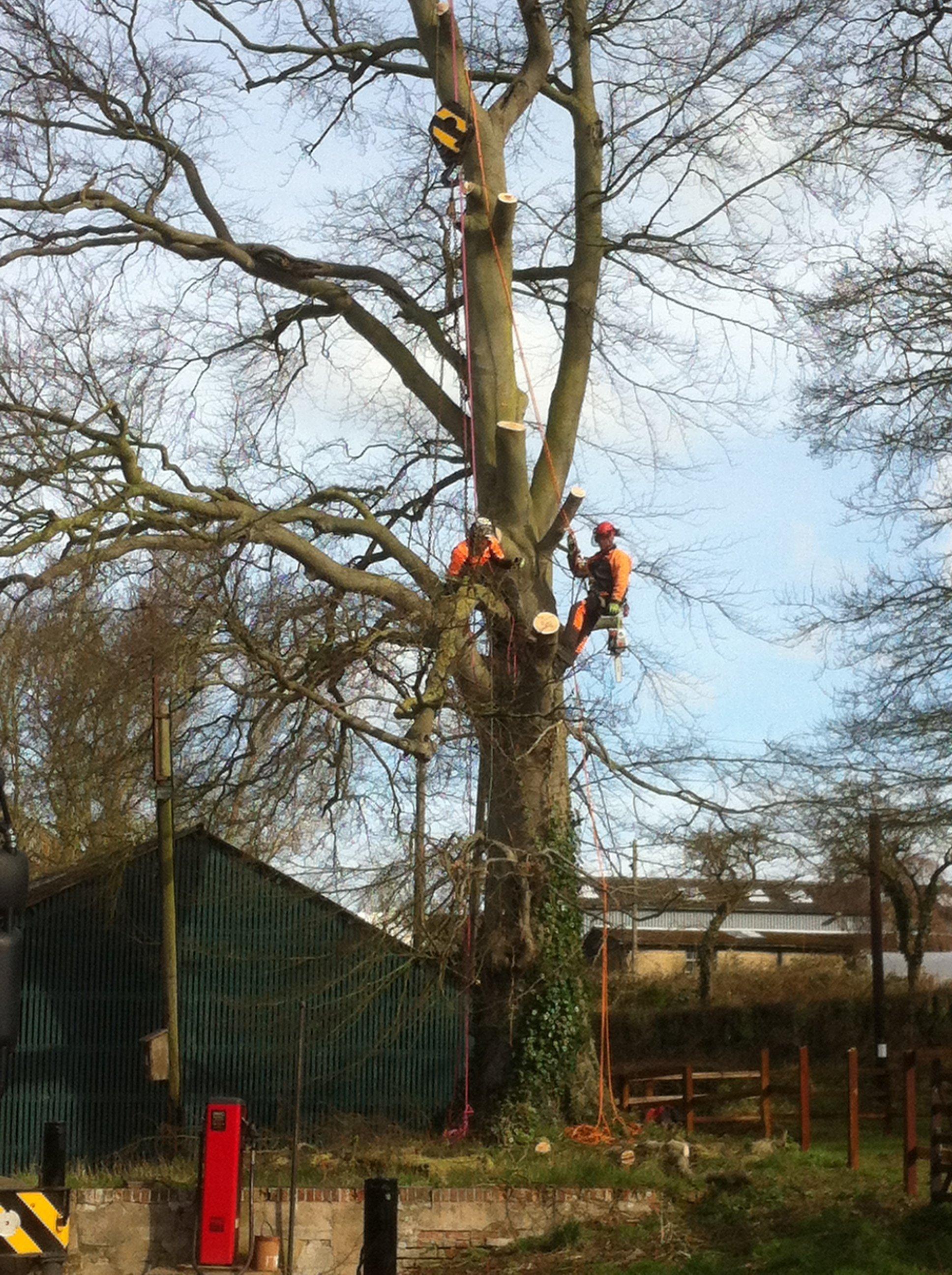 tree felling specialists
