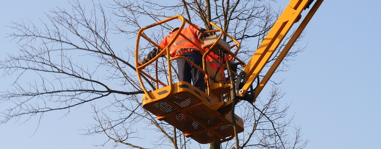 machinery for tree rescue