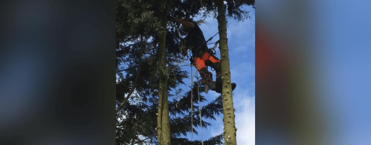 branch felling