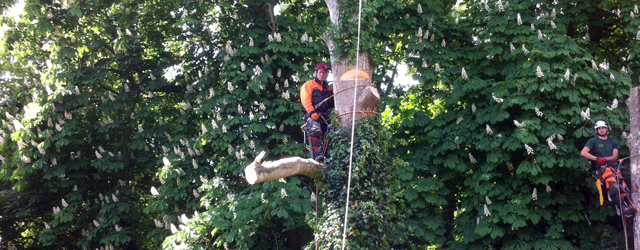 Professional tree surgery