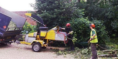 removing unwanted trees