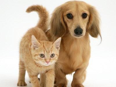 Medicina generale cani e gatti