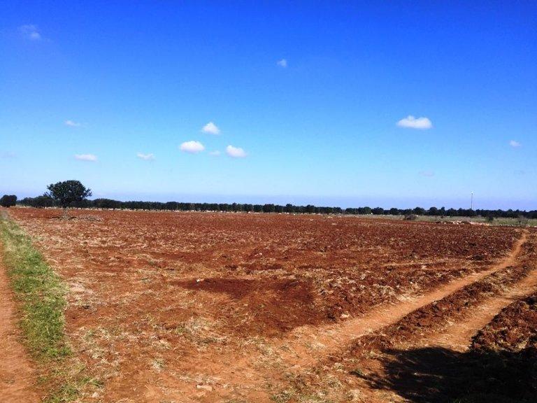 Terreno per la coltivazione di ortaggi