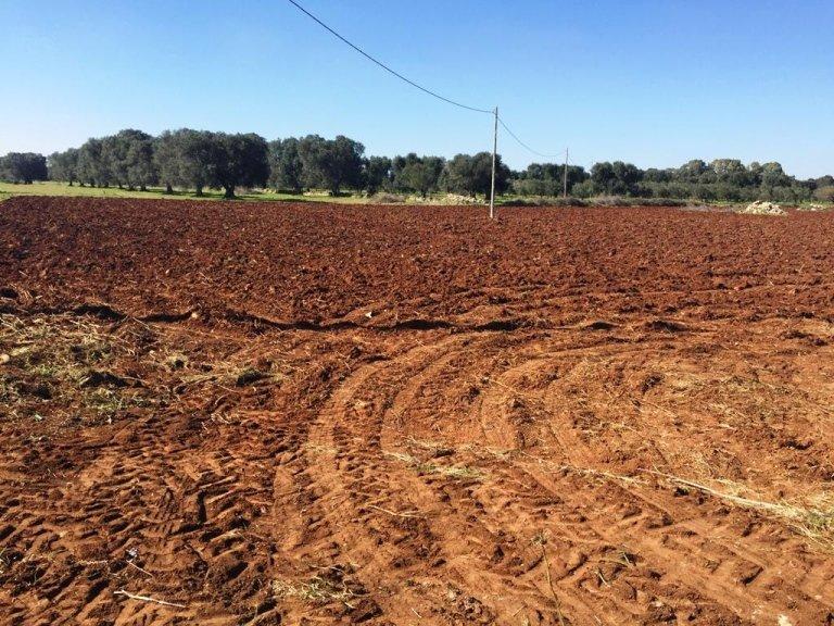 Tipico terreno per coltivazione
