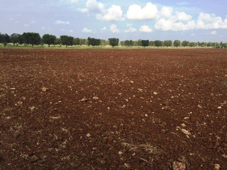 terreno da coltivare