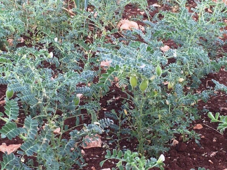 piante in un terreno fertile