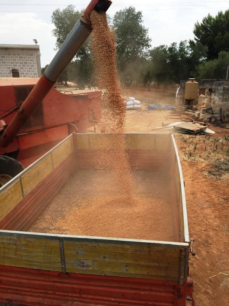emissione semi in un grande contenitore in metallo
