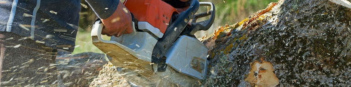 aussie beaver tree stump removing using saw