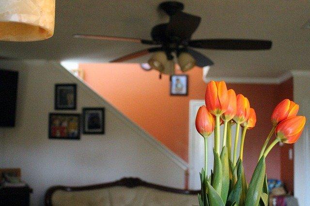 Indoor Allergens - Spokane Allergies