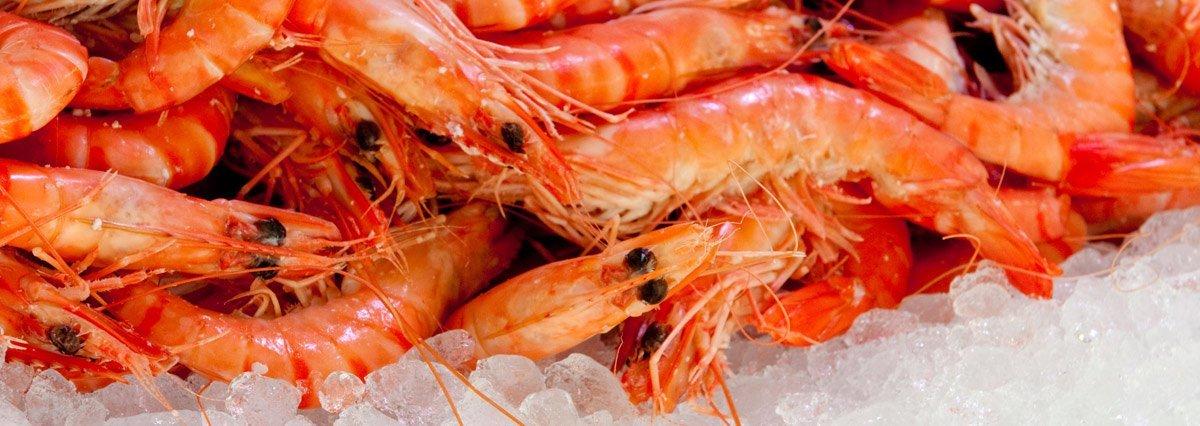 gold coast fresh prawns