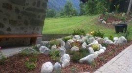 stella alpina, spiazzo, piante ornamentali