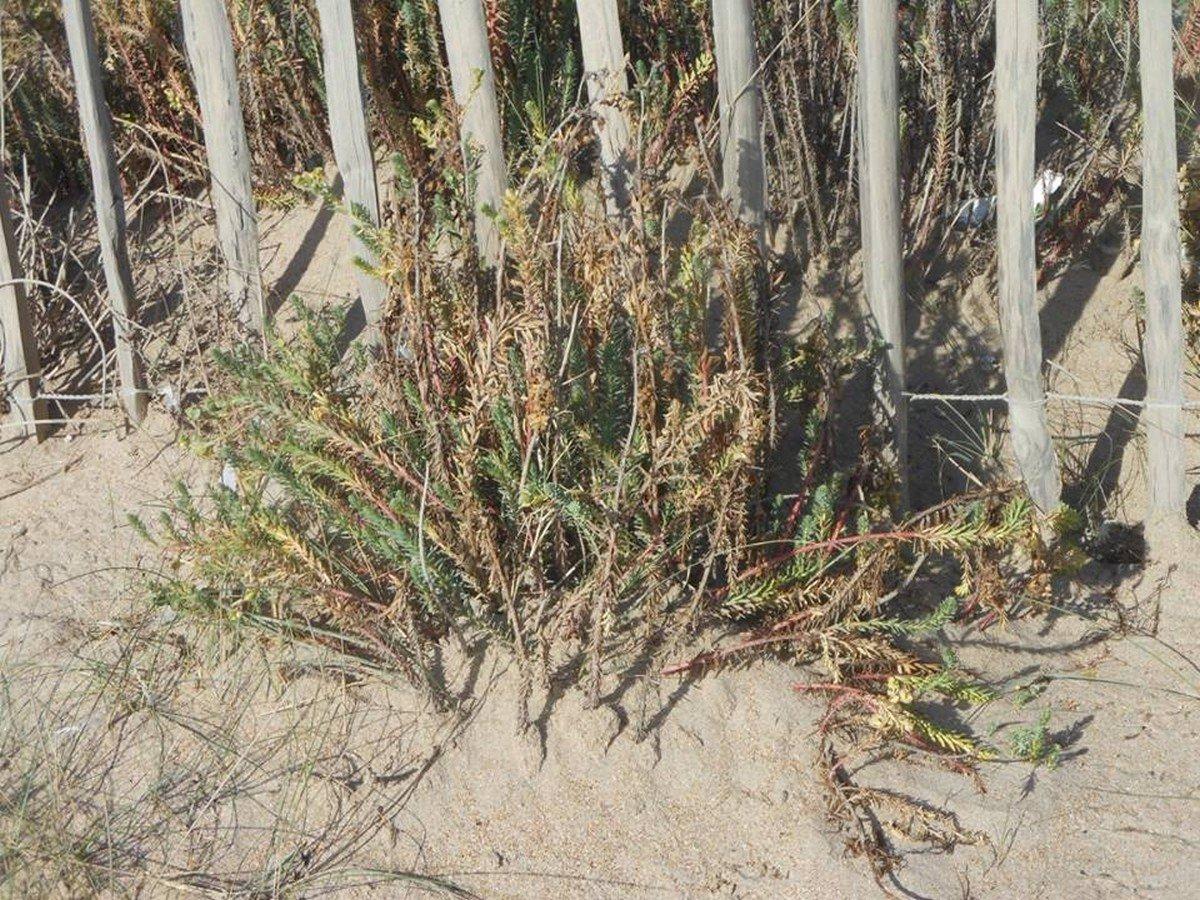 Consolidamento dune