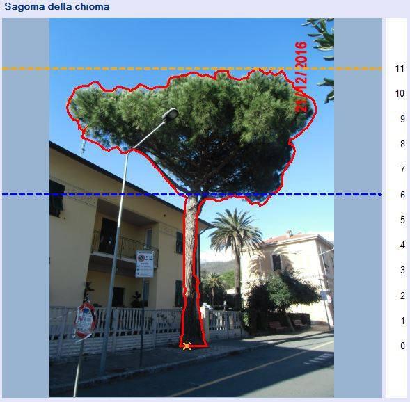 Indagine stabilita alberi SIM