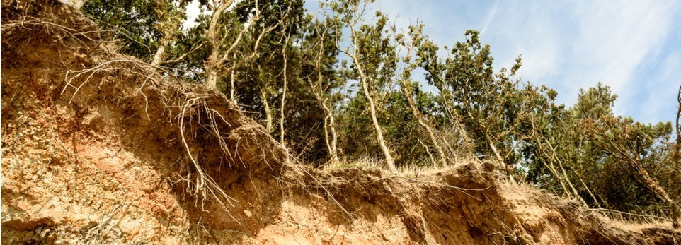 alberi radicati in un terreno eroso